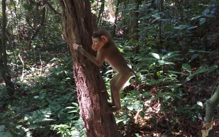 Vườn quốc gia Phong Nha – Kẻ Bàng: Thả động vật...